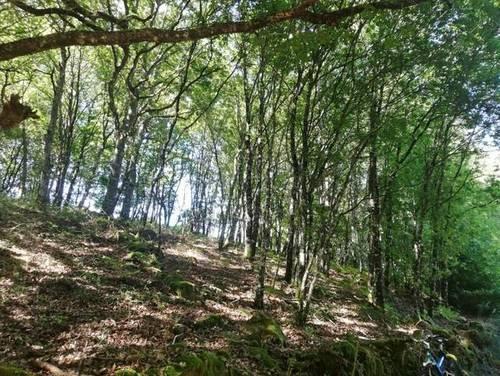 imagen 2 de Venta de terreno en Villauje Chantada