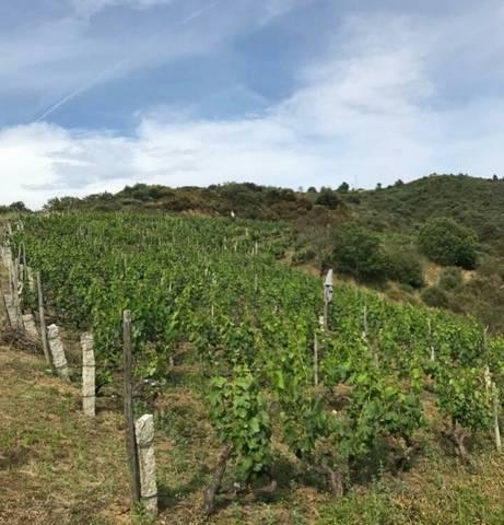 imagen 1 de Vendo viñedo en Verin con 800 cepas