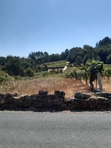 imagen 1 de Vendo viñedo en Leiro