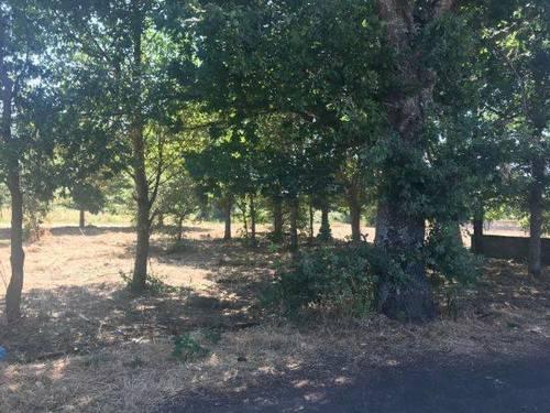 imagen 2 de Vendo terreno con frutales en Mpnterrey