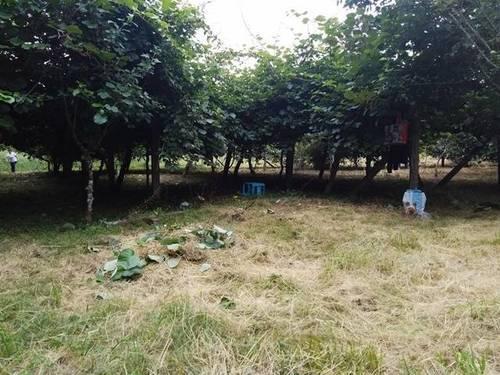imagen 1 de Venta de terreno en Redondela (Pontevedra)