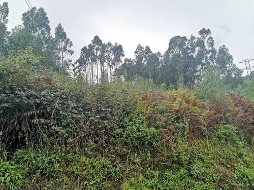 imagen 1 de Venta de terreno en O Porriño (Pontevedra)