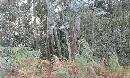imagen 2 de Venta de terreno con Eucaliptos en Vilaboa