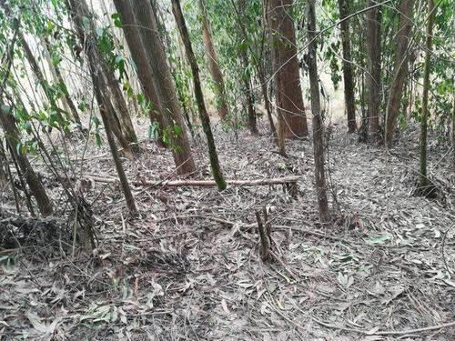 imagen 1 de Venta de terreno con Eucaliptos en Vilaboa