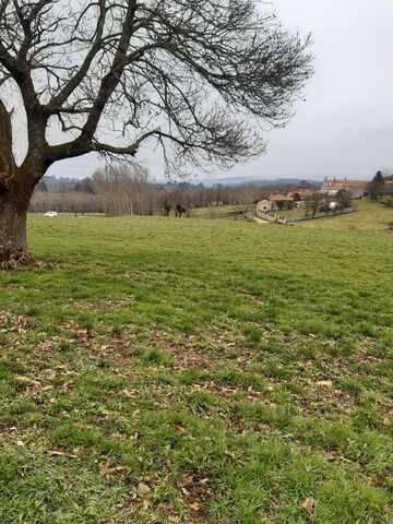 imagen 1 de Venta de preciosa finca en Silleda (Pontevedra)