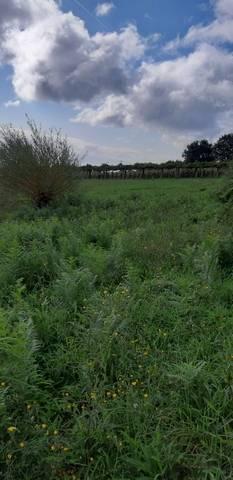 imagen 2 de Venta de terreno con viña en Mos (Pontevedra)
