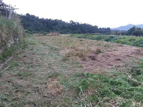 imagen 2 de Venta de terreno llano con manantial en Tomiño