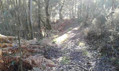 imagen 2 de Venta de terreno forestal en A graña