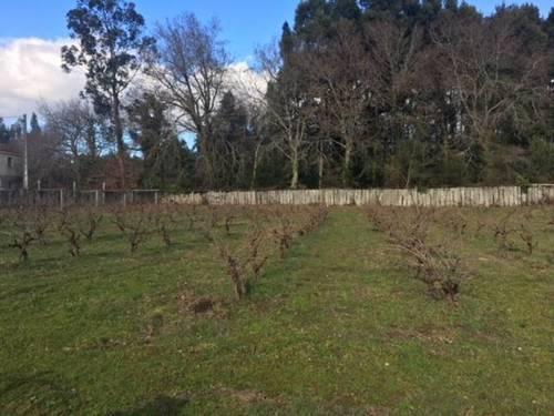 imagen 2 de Venta de terreno con viñedo en Caldas de Reis