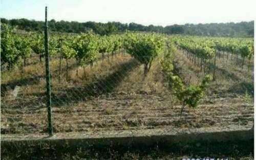 imagen 3 de Venta def inca con merendero y viñedo en Salamanca