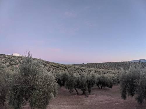 imagen 1 de Venta de gran finca en Domingo Pérez (Terre)