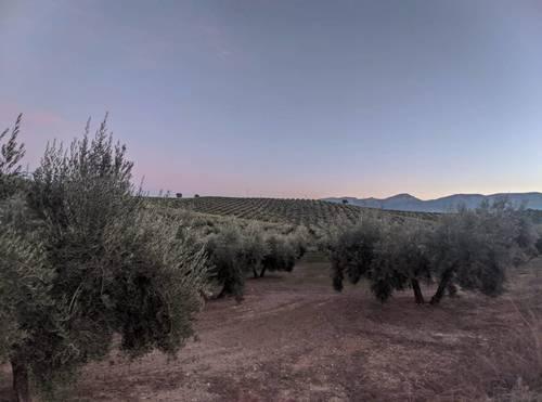 imagen 2 de Venta de gran finca en Domingo Pérez (Terre)