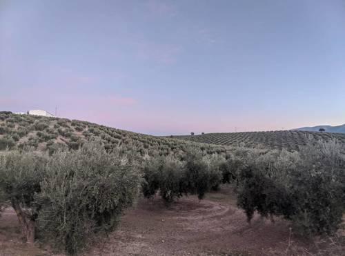 imagen 3 de Venta de gran finca en Domingo Pérez (Terre)