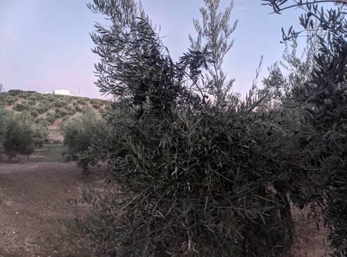 imagen 4 de Venta de gran finca en Domingo Pérez (Terre)