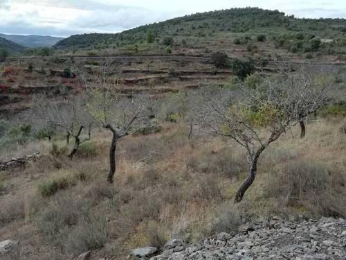 imagen 1 de Venta de finca de almendros en Salamanca