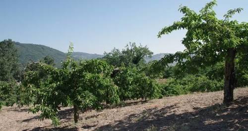 imagen 1 de Venta de finca en Santibañez de la Sierra