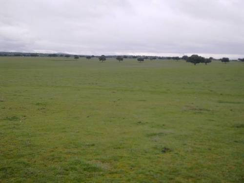 imagen 4 de Venta de finca (Dehesa) cerca de Vecinos