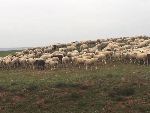 imagen 1 de Venta de estupendas fincas agrícolas y ganaderas en Riaza (Segovia)