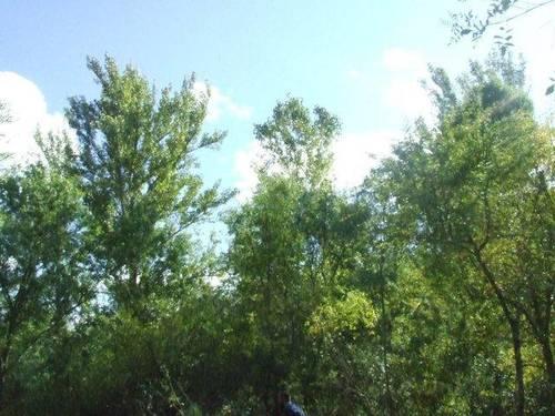imagen 2 de Venta de  bonita finca rústica en Ventosilla y Tejadilla (Segovia)