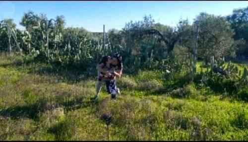 imagen 3 de Venta de terreno vallado con olivos en Tomares (Sevilla)