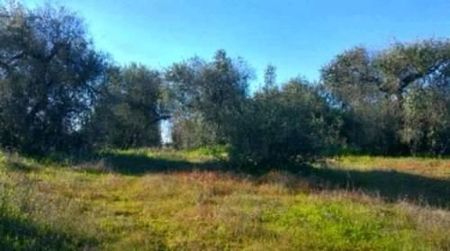 imagen 2 de Venta de terreno vallado con olivos en Tomares (Sevilla)