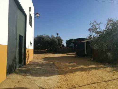 imagen 1 de Venta de finca con casa e instalaciones hípicas en Carmona (Sevilla)