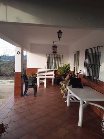 imagen 7 de Venta de finca de Naranjos y Olivar con casa en Lora del Río (Sevilla)