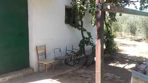 imagen 1 de Venta de olivar con casa en Bollullos  de la Mitación (Sevilla)