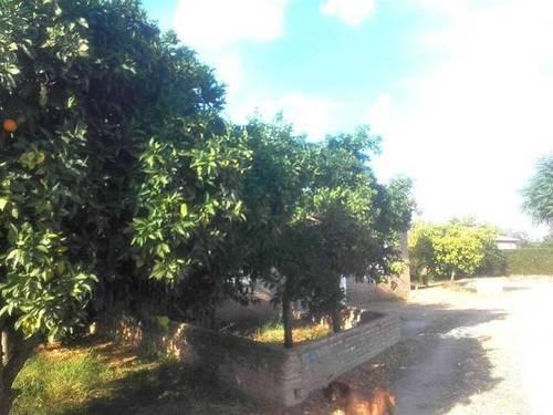imagen 3 de Venta de finca de naranjos con nave en La Algaba (Sevilla)