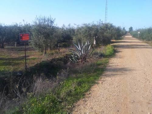 imagen 2 de Venta de finca con olivos en Pilas (Sevilla)