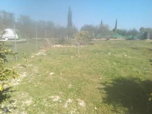imagen 2 de Venta de terreno rústico en Los Palacios y Villafranca (Sevilla)