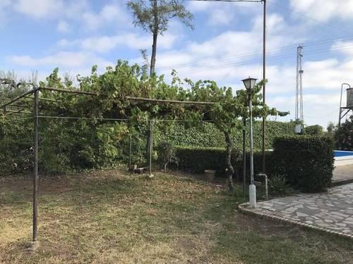 imagen 3 de Venta de parcela con olivos y casa en Almensilla (Sevilla)