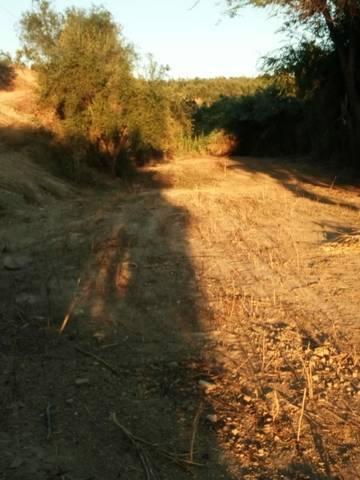 imagen 1 de Venta de finca rústica con buen acceso en Sanlucar La Mayor