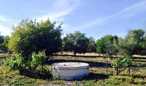 imagen 2 de Venta de olivar de regadío en Lebrija (Sevilla)