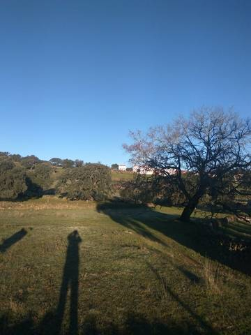 imagen 3 de Venta de bonita parcela en La Aulaga (Sevilla)