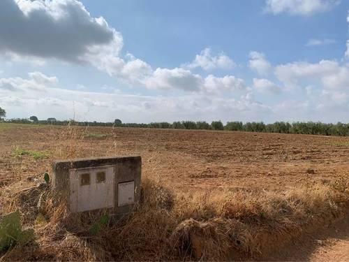 imagen 2 de Venta de finca rústica con buena ubicación en Benacazón