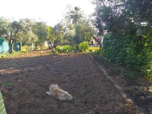 imagen 3 de Venta de parcela con casa en Los Palacios y Villafranca