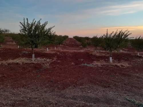 imagen 1 de Venta de finca de almendros en El Cuervo (Sevilla)