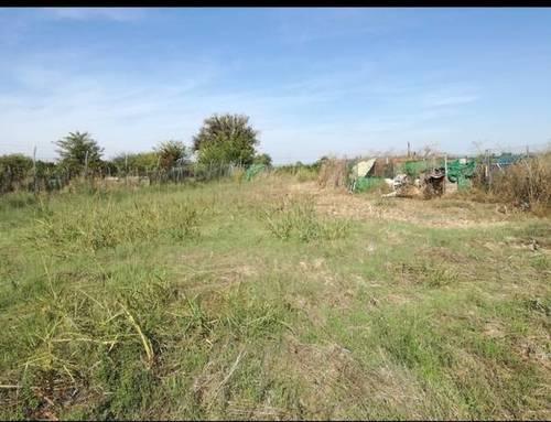 imagen 2 de Venta de terreno rústico fértil en La Algaba (Sevilla)