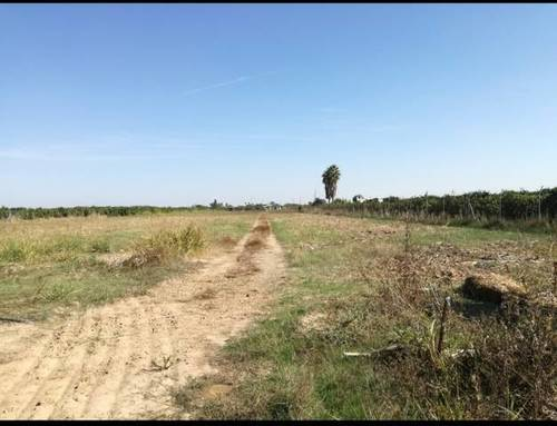 imagen 1 de Venta de terreno rústico fértil en La Algaba (Sevilla)