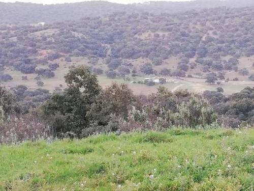 imagen 1 de Venta de dehesa con caserío en Alanis (Sevilla)