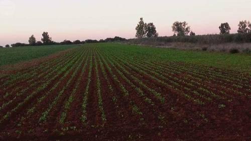 imagen 1 de Venta de terreno de regadío en Los Palacios (Sevilla)