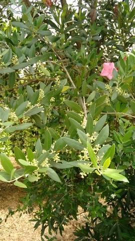 imagen 1 de Venta de finca de naranjos con riego en Dos Hermanas (Sevilla)