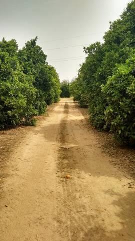 imagen 2 de Venta de finca de naranjos con riego en Dos Hermanas (Sevilla)