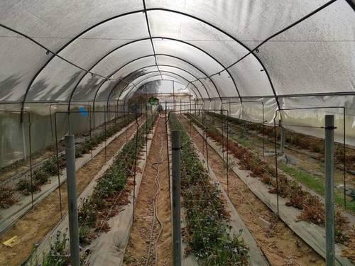 imagen 7 de Venta de finca con olivar e invernadero en Utrera