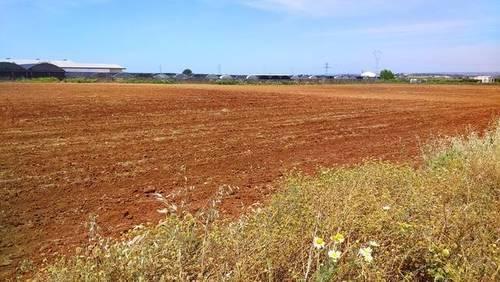 imagen 2 de Venta de finca de regadío en Brenes (Sevilla)