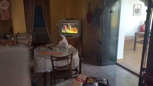 imagen 2 de Venta de finca de olivos con casa en Carmona