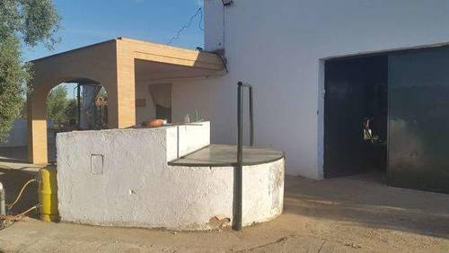 imagen 3 de Venta de finca de olivos con casa en Carmona