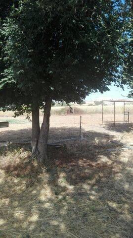 imagen 4 de Venta de terreno ideal para guardar caballos