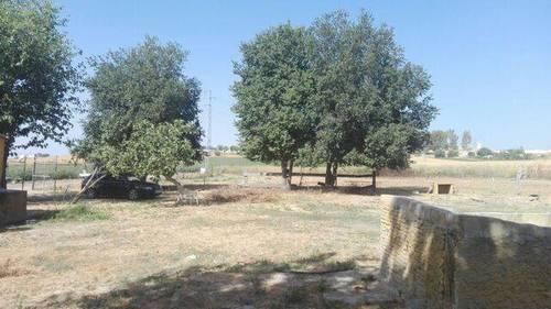 imagen 5 de Venta de terreno ideal para guardar caballos